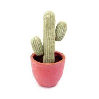 Kaktus & ørkenplanter